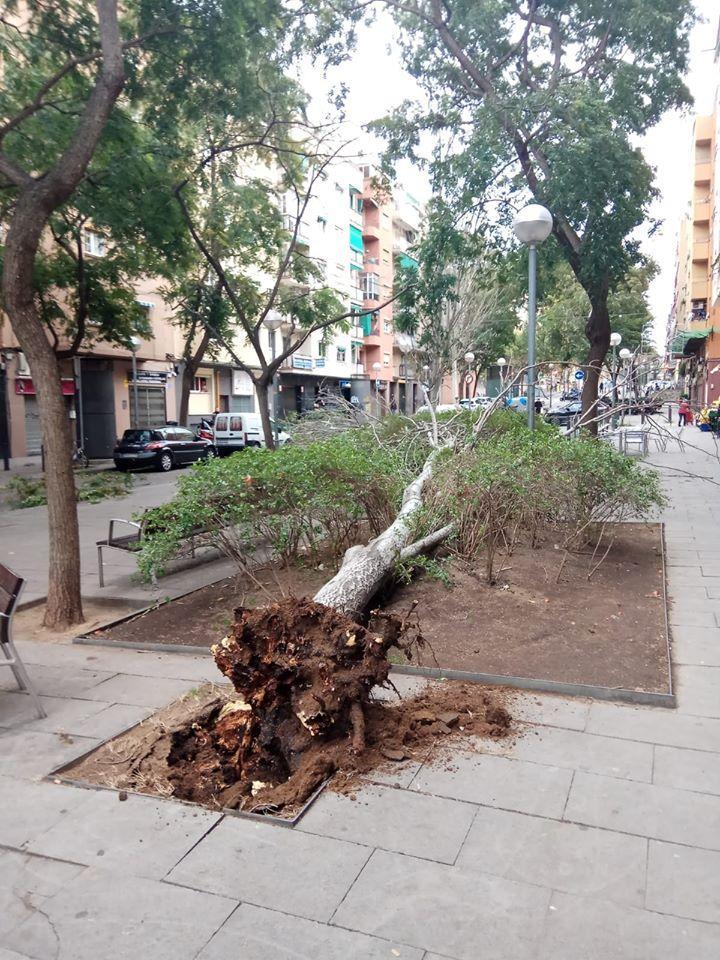 Un arbre caigut al barri de la Prosperitat, a Nou Barris / Chary Moreno