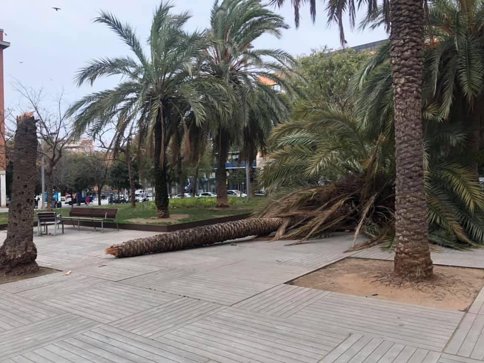 Un arbre caigut als jardins d'Elx, a Sant Andreu / Àlex Lechuga