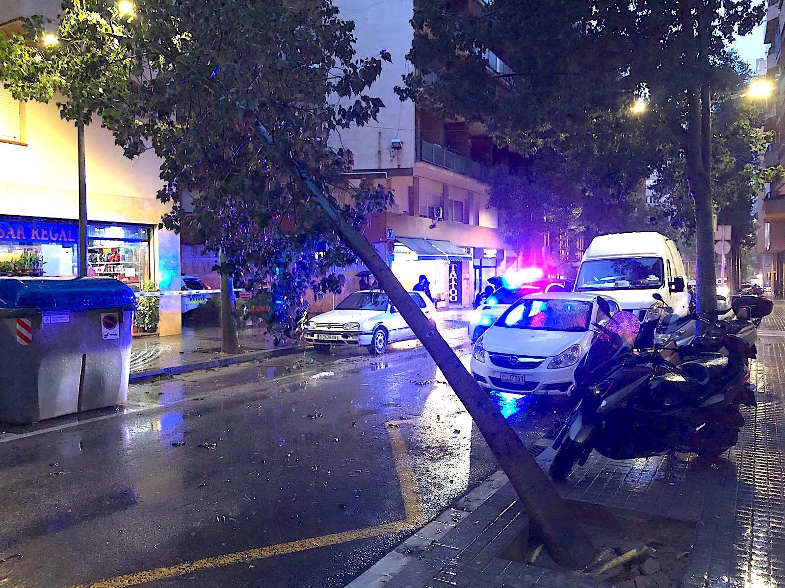Un arbre tombat pel vent durant el temporal Glòria al carrer Galileu, a les Corts / Cedida