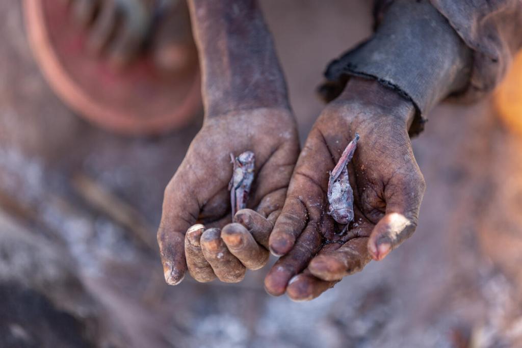 Una dona mostra les llagostes que s'ha vist obligada a menjar per sobreviure   Programa Mundial d'Aliments